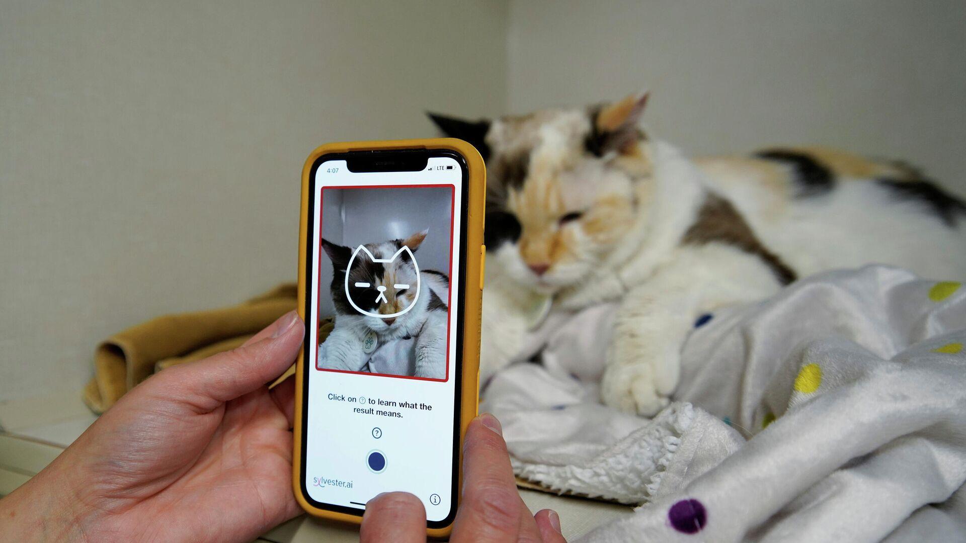 Una veterinaria utiliza la aplicación Tably - Sputnik Mundo, 1920, 28.07.2021