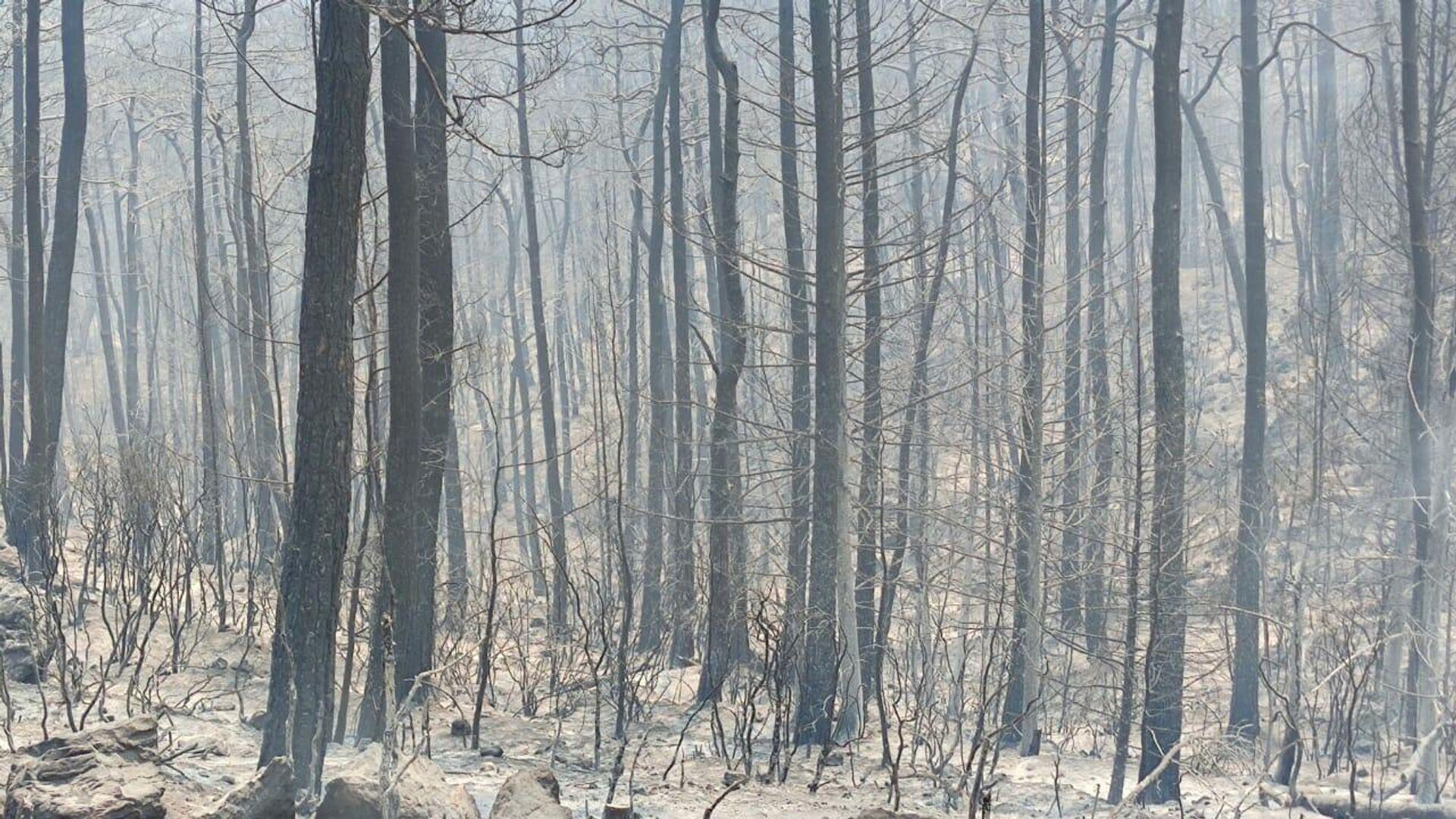 Un bosque quemado en Turquía - Sputnik Mundo, 1920, 06.08.2021