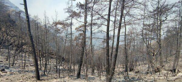 El balance de personas damnificadas por los siniestros naturales ascendió a 250 y hasta el momento se reportaron seis fallecidos. En la foto: un bosque devorado por los incendios en Turquía. - Sputnik Mundo