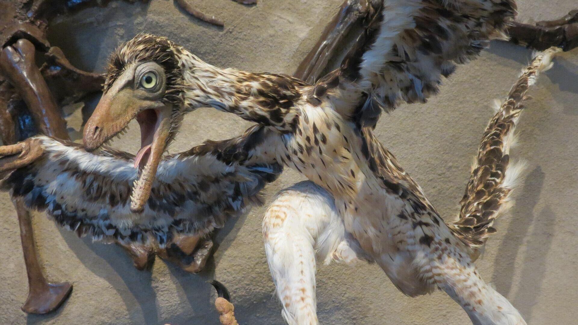 Un archaeopteryx - Sputnik Mundo, 1920, 31.07.2021