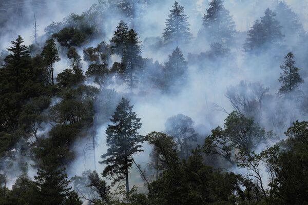 Para el 31 de julio, más de 710.000 hectáreas fueron consumidas por los incendios forestales en EEUU, según informó el Centro Nacional Interagencial de Bomberos. En la foto: los árboles arden mientras el incendio crece en el Bosque Nacional Plumas de California, Estados Unidos. - Sputnik Mundo