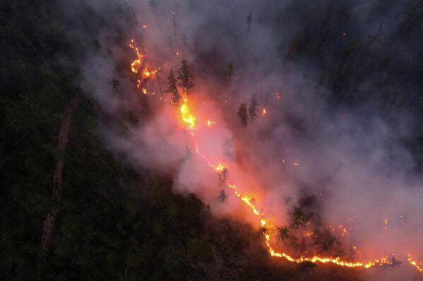 Yakutia, así como otras localidades rusas, sufre un espeso humo que impide la lucha contra el fuego en la región. En la foto: una línea de fuego se abre paso en un bosque siberiano. - Sputnik Mundo