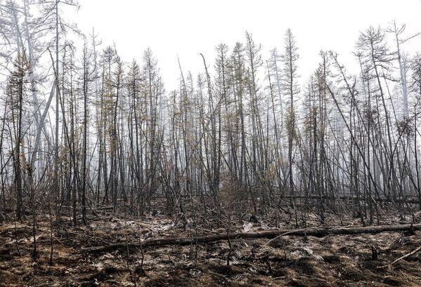 Desde el inicio de la temporada de incendios forestales, en el territorio del parque fueron registrados 11 focos, siete de ellos ya fueron extinguidos. Las autoridades consideran que la única causa de este desastre natural es el cambio climático. En la foto: un bosque siberiano afectado por los incendios forestales por la ola de calor. - Sputnik Mundo