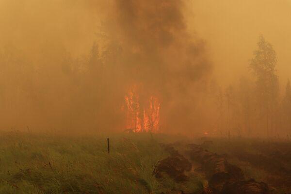 Los incendios forestales en Yakutia, Rusia - Sputnik Mundo