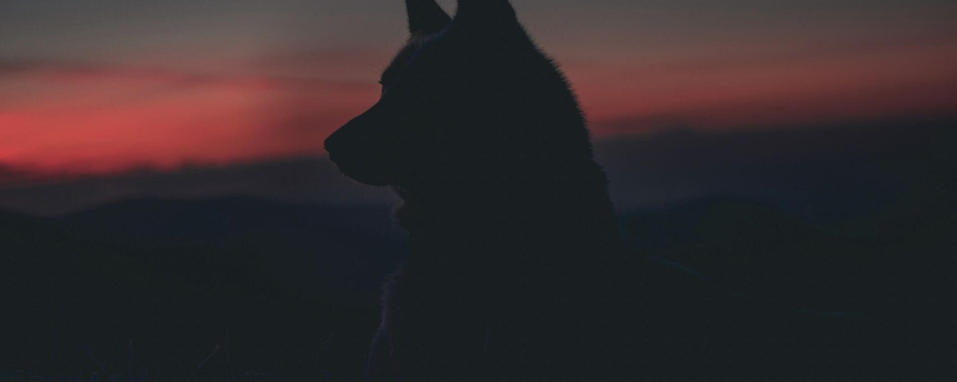 Un perro (imagen referencial) - Sputnik Mundo, 1920, 04.08.2021