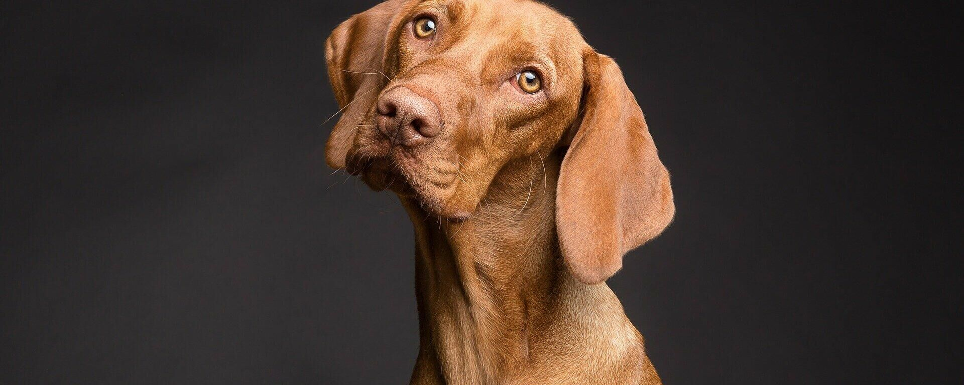 Un perro  - Sputnik Mundo, 1920, 05.08.2021