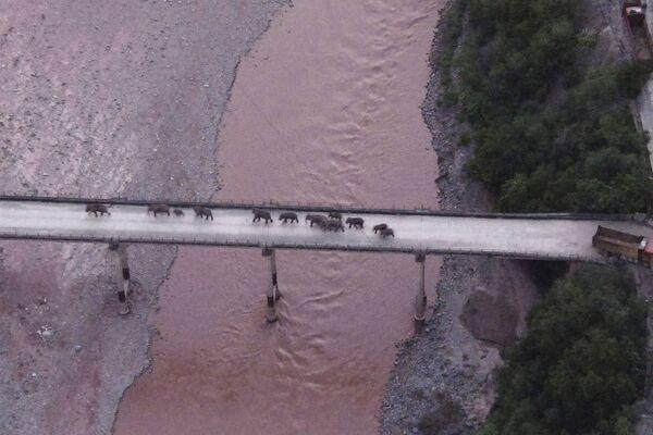 Una manada de elefantes errantes cruza un río por un puente cerca de la ciudad de Yuxi, en la provincia de Yunnan (China), el 8 de agosto. - Sputnik Mundo