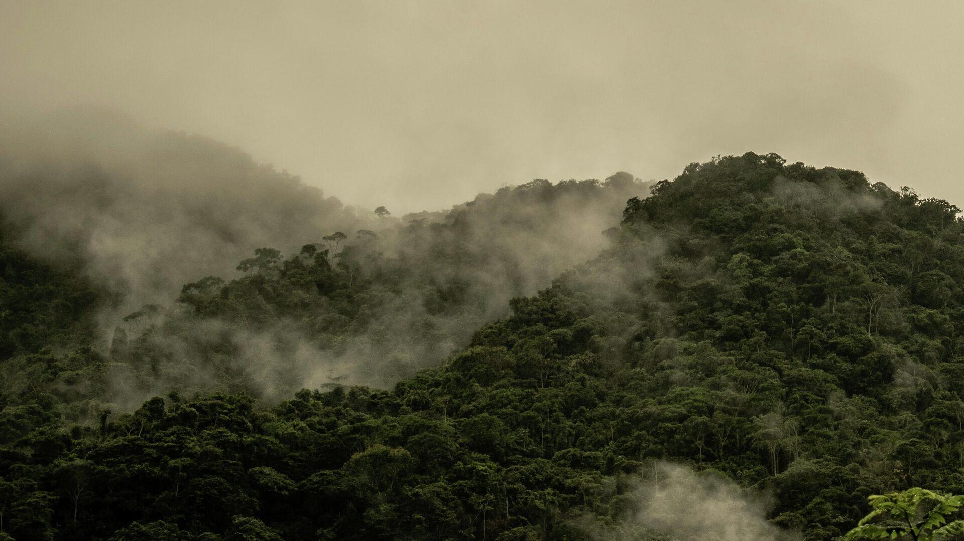Bosque nativo colombiano - Sputnik Mundo, 1920, 23.08.2021