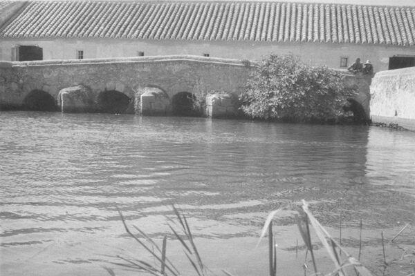 Molino de Molemocho y río Guadiana en Las Tablas de Daimiel, Parque Natural de Ciudad Real (España) - Sputnik Mundo