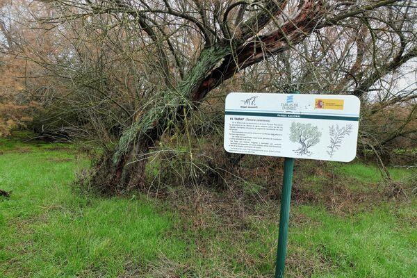 Un taray en Las Tablas de Daimiel, Parque Natural de Ciudad Real (España) - Sputnik Mundo