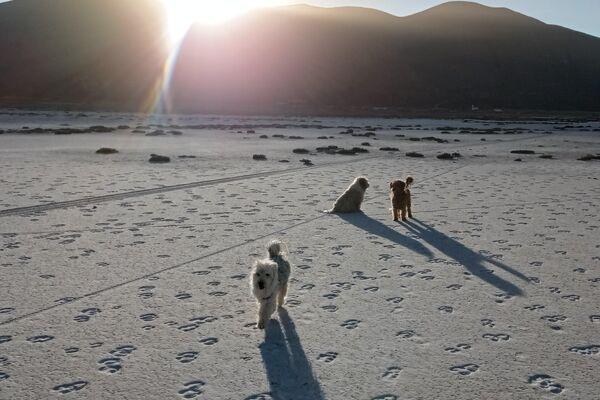 Sequía del lago Poopó, en Oruro, Bolivia - Sputnik Mundo