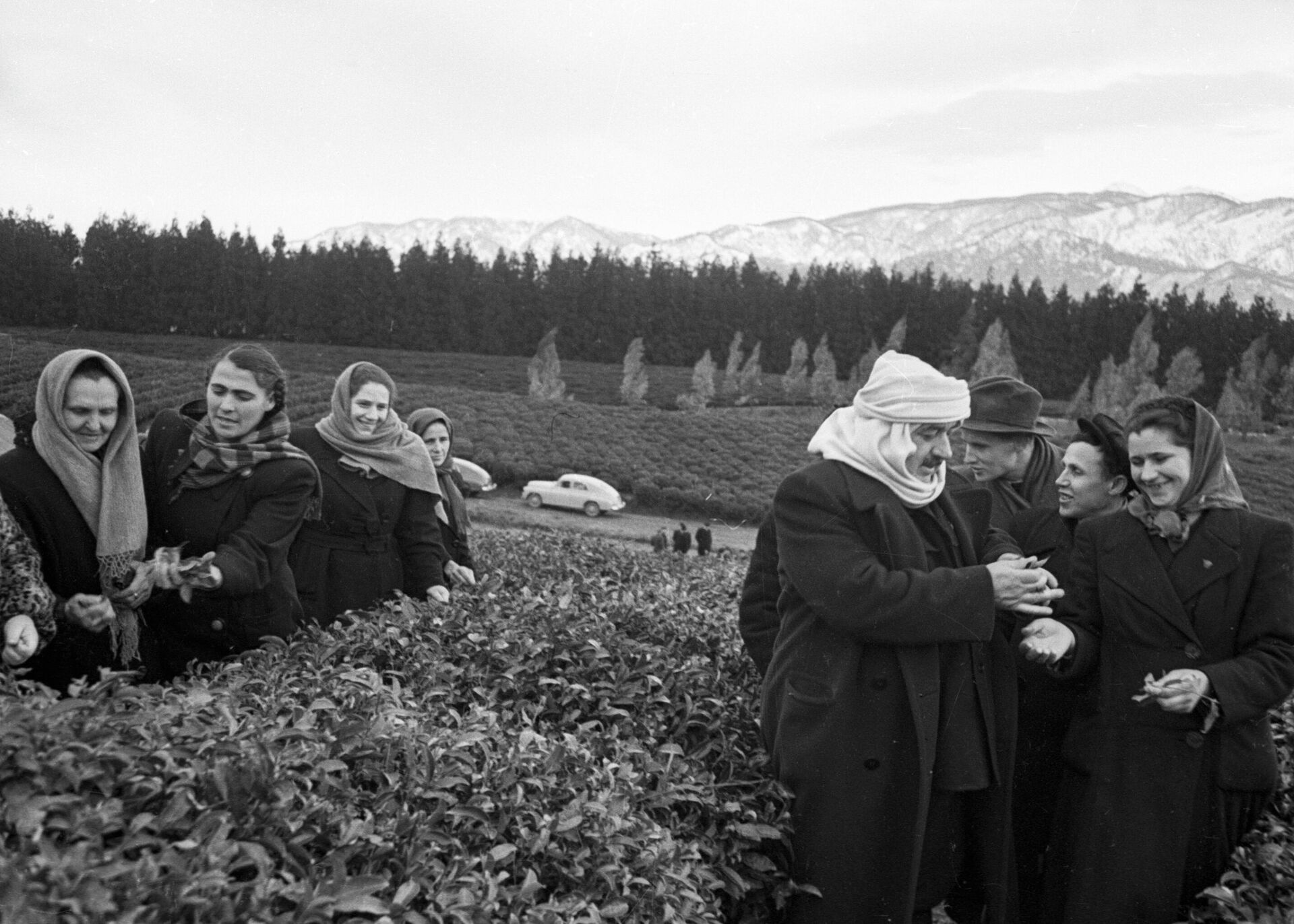 Plantaciones de té en la República Socialista Soviética de Georgia - Sputnik Mundo, 1920, 07.09.2021