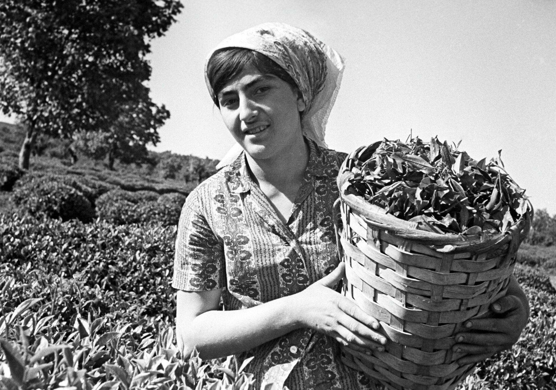 Una mujer cosecha té en los valles de la República Socialista Soviética de Georgia - Sputnik Mundo, 1920, 07.09.2021