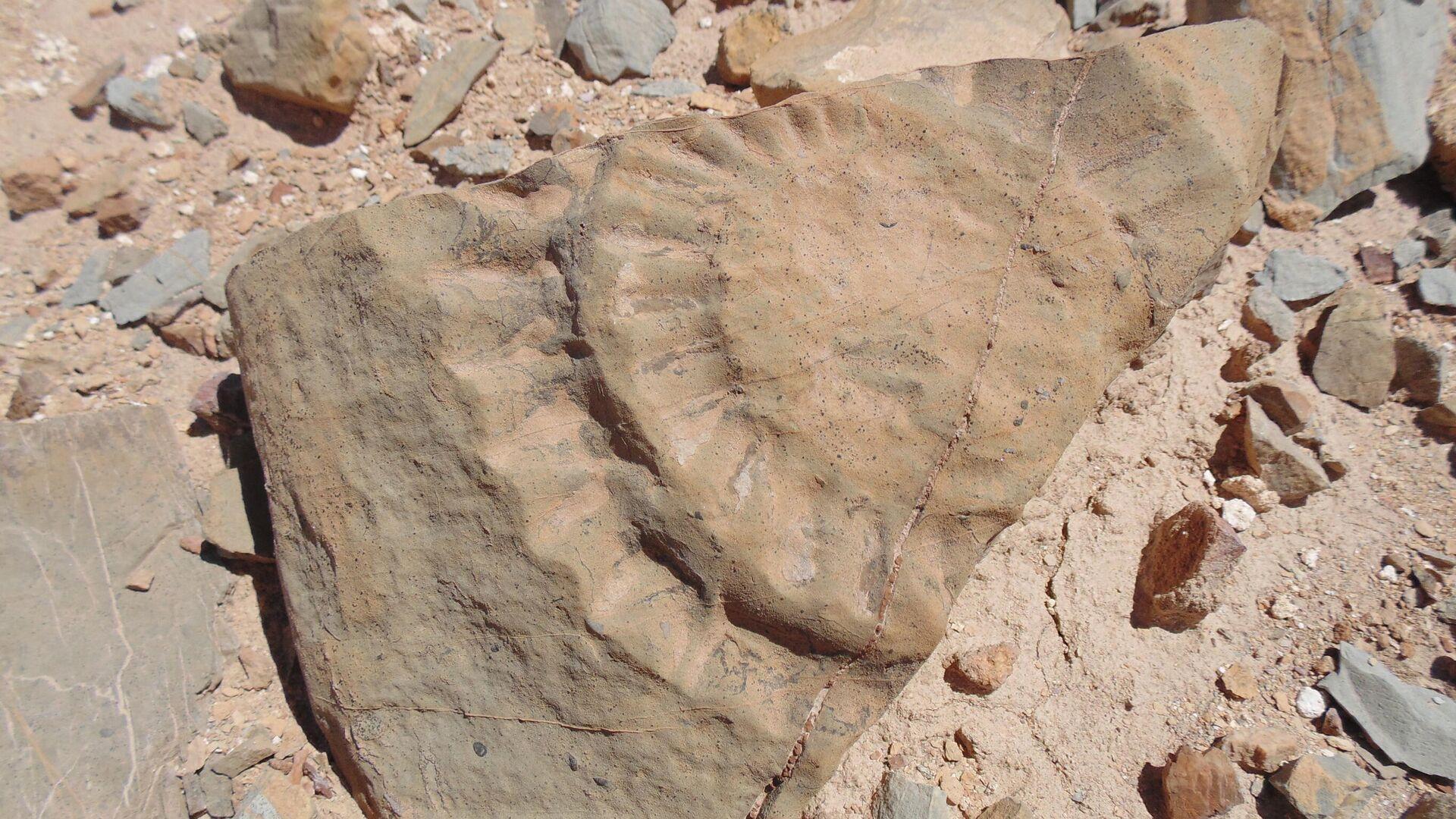 Los restos del pterosaurio hallado en Chile - Sputnik Mundo, 1920, 11.09.2021