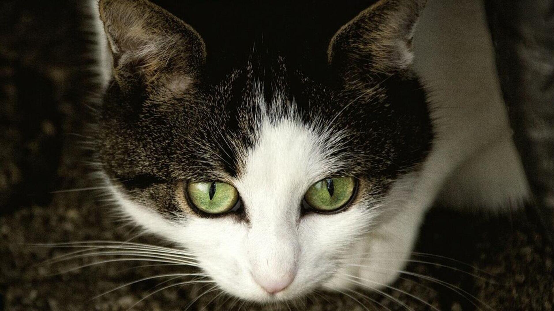 Un gato, foto de archivo - Sputnik Mundo, 1920, 12.09.2021