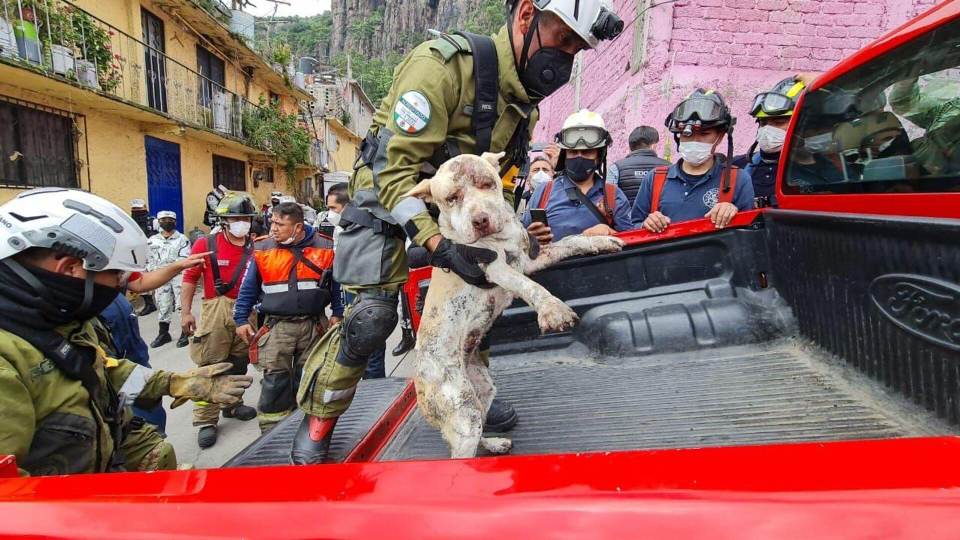 Perro rescatado en desgajamiento del Chiquihuite, México - Sputnik Mundo, 1920, 13.09.2021