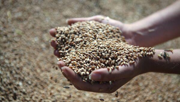 Rusia estima exportar hasta 30 millones de toneladas de grano en este año agrícola - Sputnik Mundo