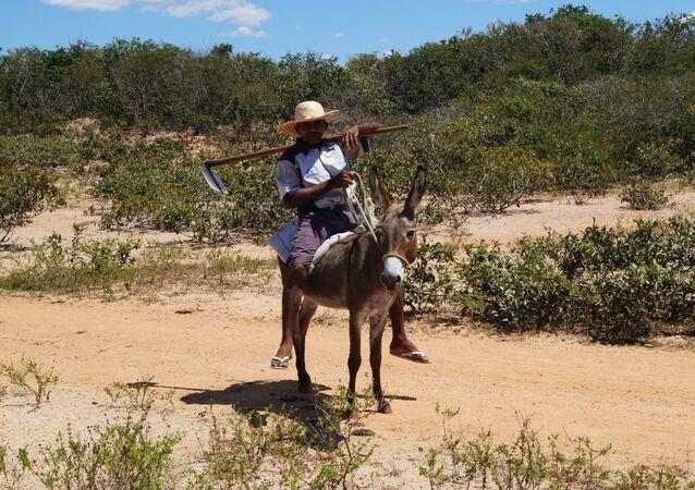 Фермер в Бразилии