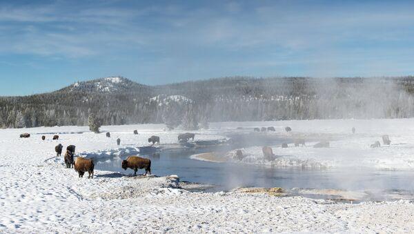 Alerta roja en Yellowstone, EEUU, por derrame de petróleo - Sputnik Mundo