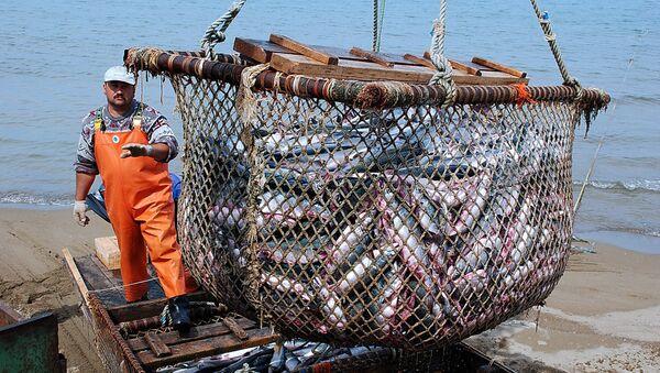 Rusia espera duplicar la producción de pescado en cinco años - Sputnik Mundo