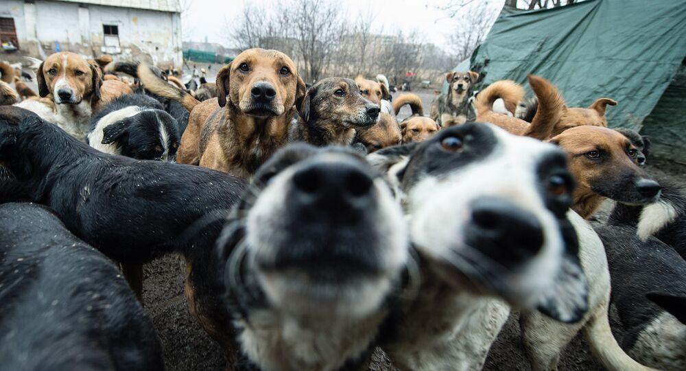 Los perros en la calle