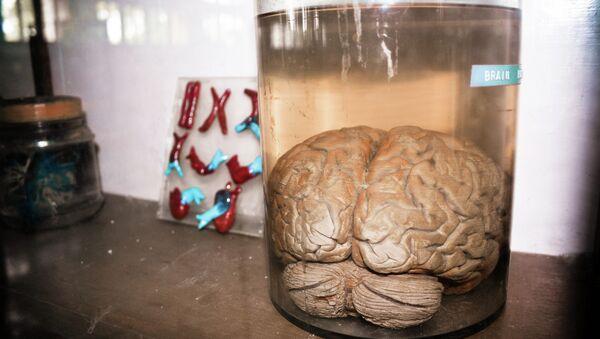 Brain in a Jar - Sputnik Mundo
