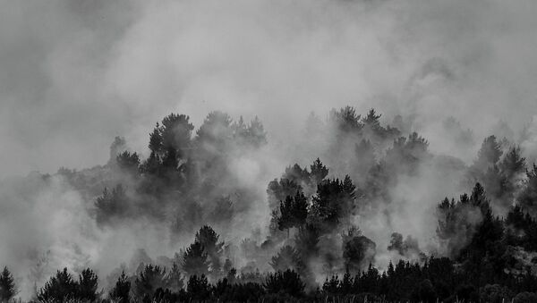 Fuerte sequía y acciones vandálicas incendian bosques de Colombia - Sputnik Mundo