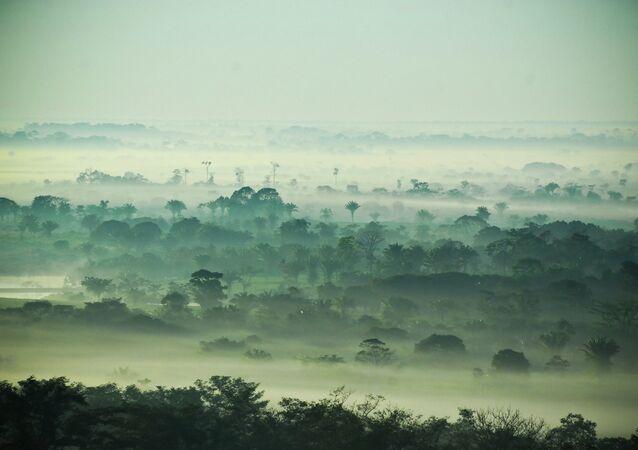 Bosques de Amazonía