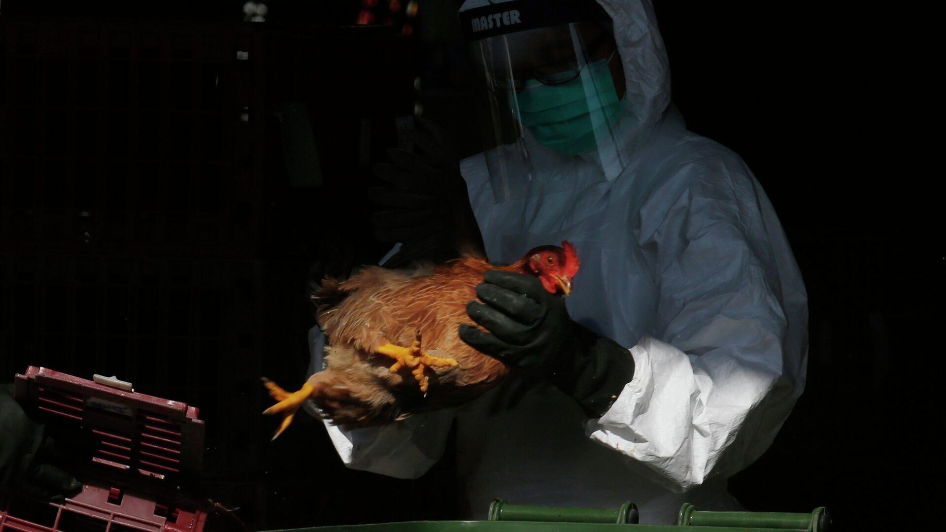 La gripe aviar (imagen referencial) - Sputnik Mundo, 1920, 12.03.2021