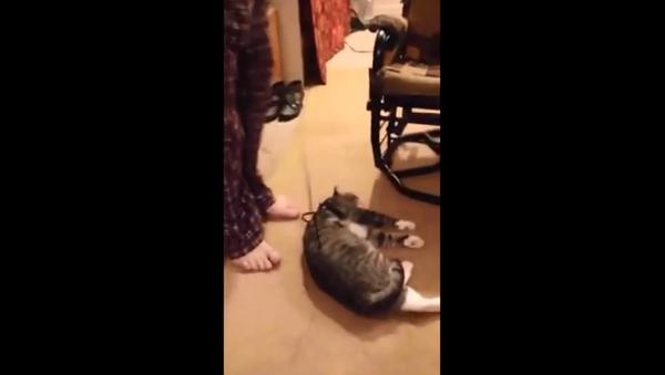 El gato que sabe pasar por muerto - Sputnik Mundo