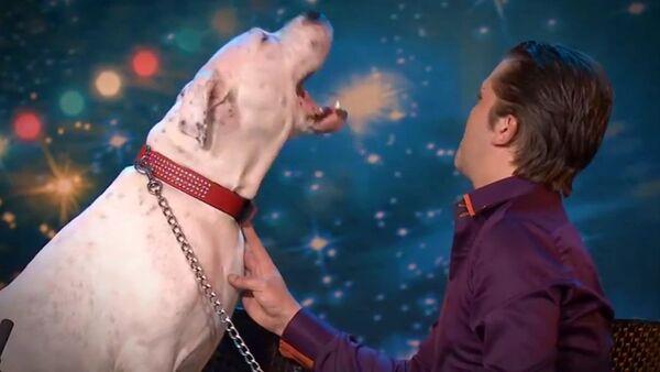 La perra que canta por Whitney Houston - Sputnik Mundo