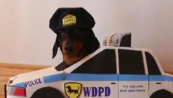 El policía y el ladrón, juego de perros - Sputnik Mundo