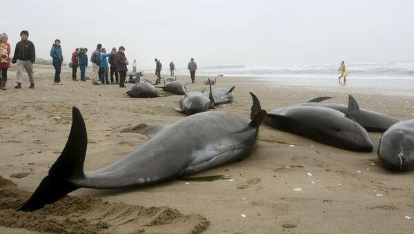 Aparecen unos 150 delfines varados en la costa oriental de Japón - Sputnik Mundo