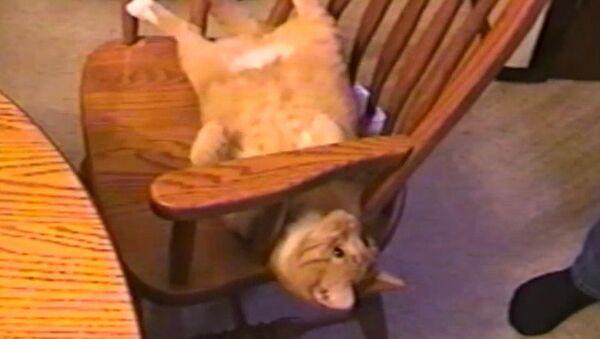 Acróbata felino - Sputnik Mundo
