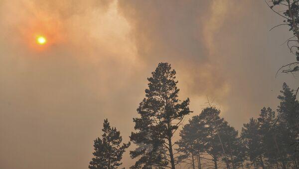 Incendios forestales in Siberia - Sputnik Mundo