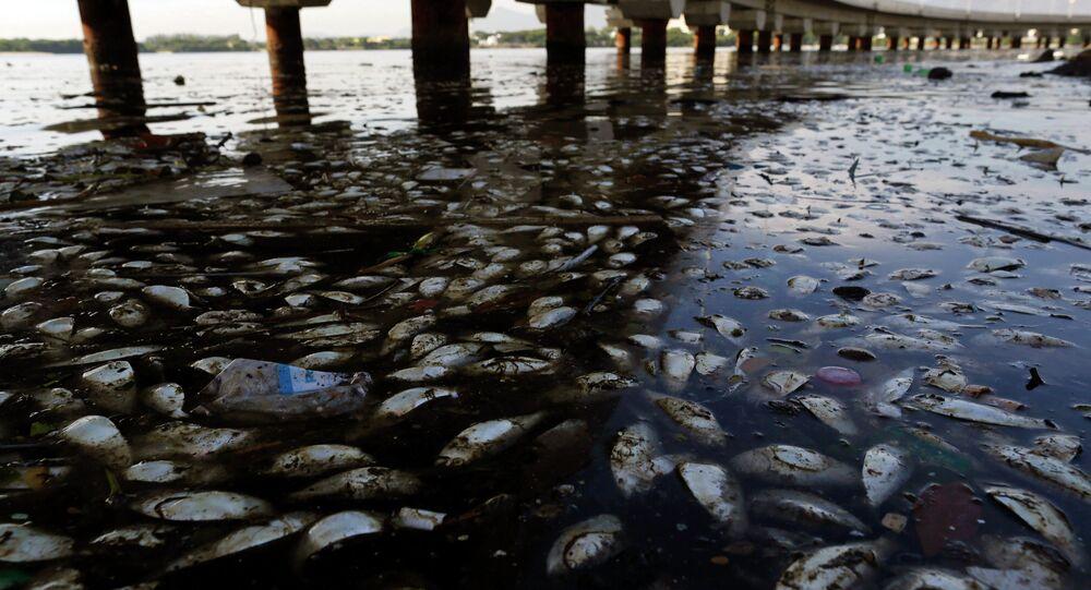 Retiran 53 toneladas de peces muertos de la laguna donde se competirá en Río 2016