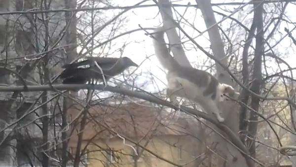 La burla de un cuervo - Sputnik Mundo