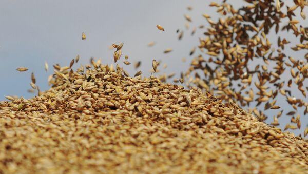 Сбор урожая на сельхозпредприятии Пульс-Агро - Sputnik Mundo