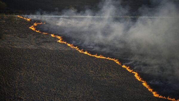 Incendio forestal en Chernóbil - Sputnik Mundo