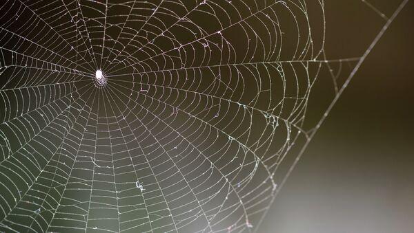 Telaraña las arañas - Sputnik Mundo
