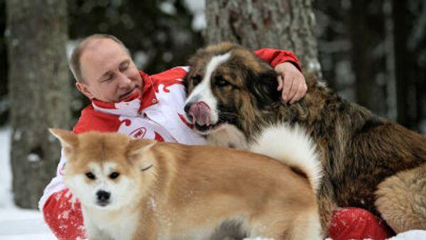 Vladímir Putin con sus perros - Sputnik Mundo