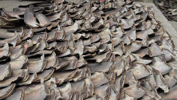 La policía aduanera de Ecuador decomisó unas 200.000 aletas de tiburón que los contrabandistas preveían enviar a Asia - Sputnik Mundo
