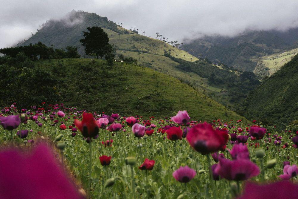 """Una foto de la serie """"La noche terrible, resistencia indígena en Colombia"""""""