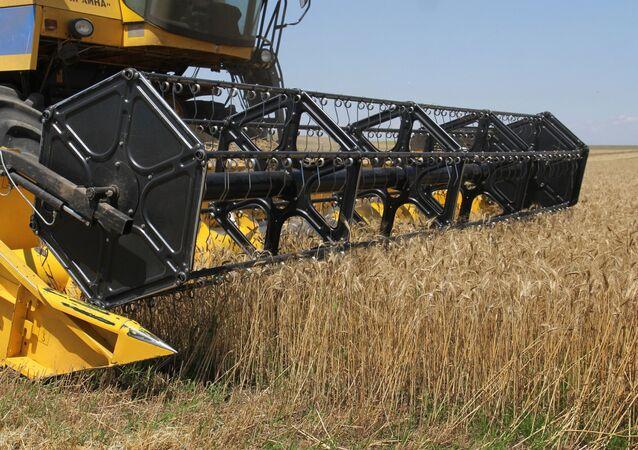 Cosecha de trigo en Rusia