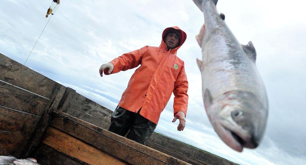 Pesca del salmón