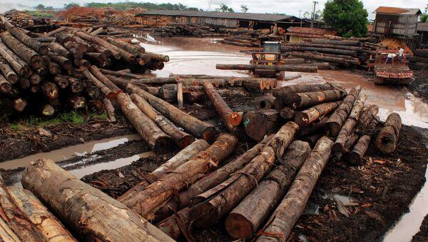 Rousseff anuncia el fin de la tala ilegal en Brasil para 2030 - Sputnik Mundo