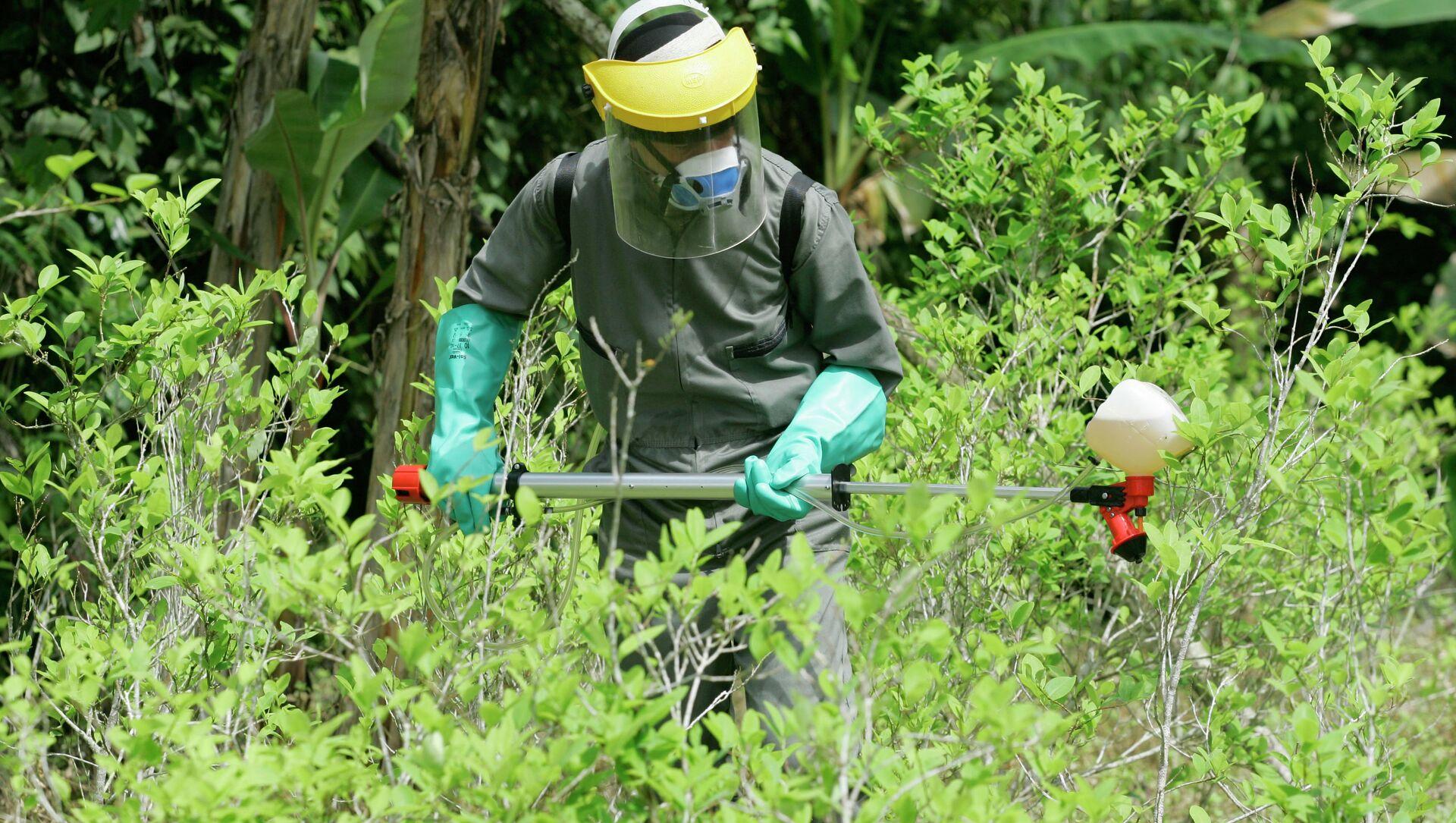 A counter-narcotics police officer sprays herbicide over a coca plant during a campaign to eradicate coca crops in La Espriella, southern Colombia. - Sputnik Mundo, 1920, 16.09.2020