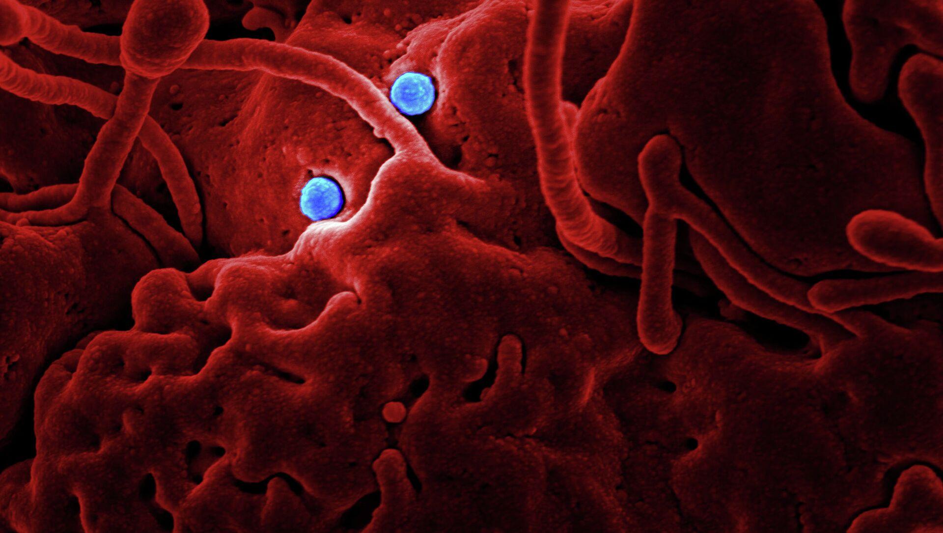 Coronavirus Particles (imagen referencial) - Sputnik Mundo, 1920, 04.02.2021