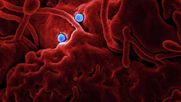 Coronavirus Particles (imagen referencial) - Sputnik Mundo