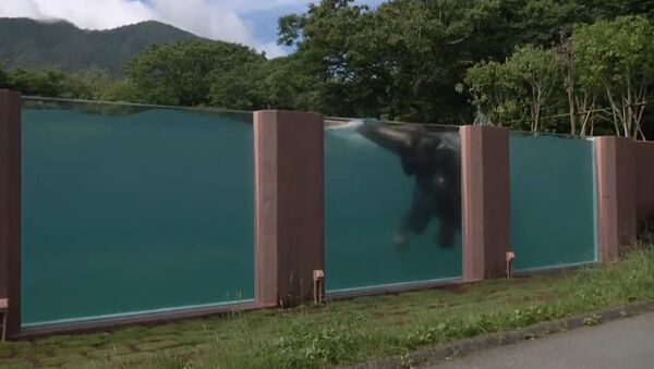 Una piscina transparente - Sputnik Mundo